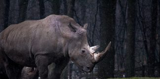 rezervatie rinoceri