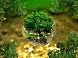 comportament ecologic